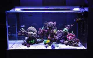 Светильник для морского аквариума: своими руками, LED