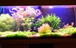 Сколько должен гореть свет в аквариуме
