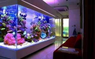 Светильник для аквариума: как выбрать лучший (фото)