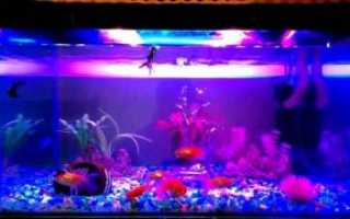 Как своими руками сделать светодиодный светильник для аквариума