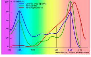 Какие выбрать светодиодныефитолампы для растений
