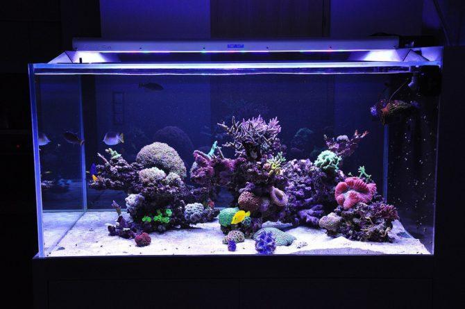 LED в аквариуме