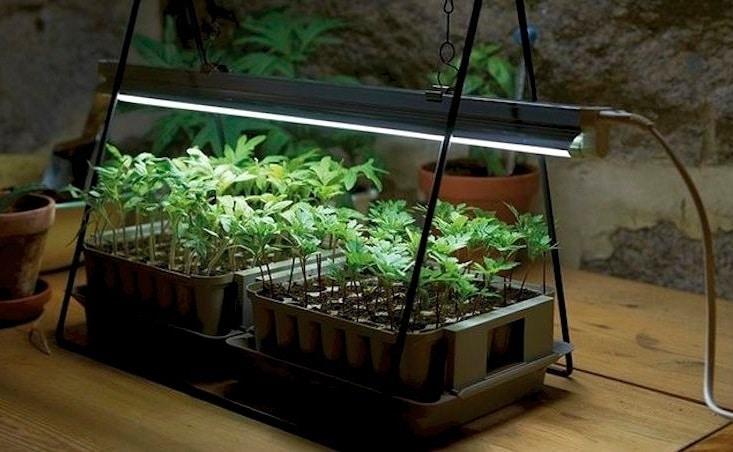 Лампа для выращивания зелени