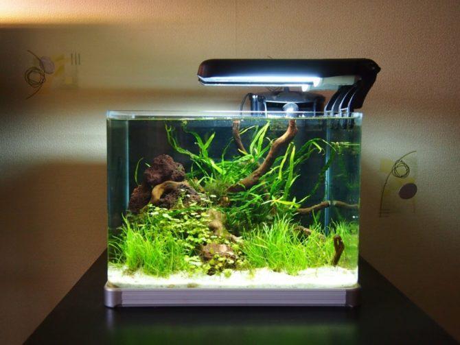 аквариум с подстветкой