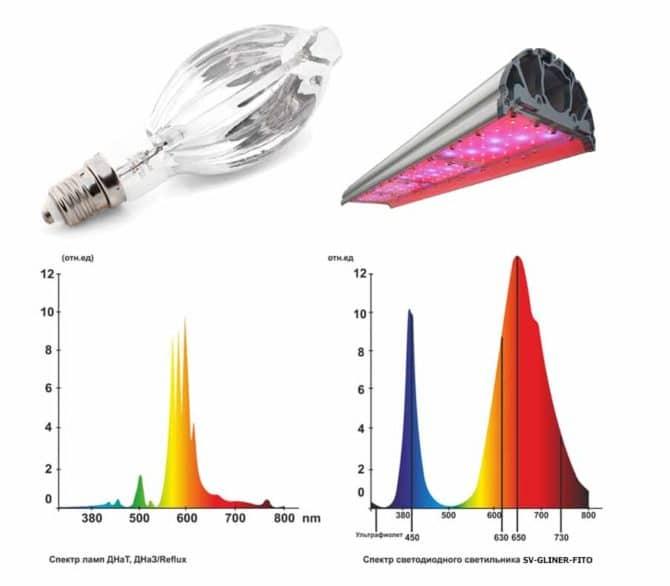 Сравнение ДНаТ и фитосветильника