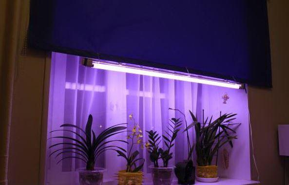 Лампа Fluora для выращивания растений