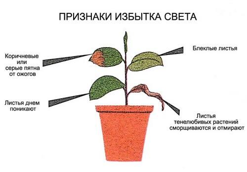 Признаки избытка света для растений