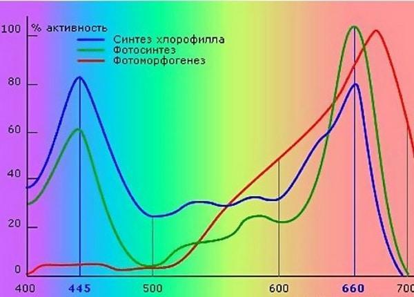 График фотосинтезасинтеза